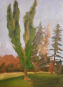 Split Cypress - Oil on Canvass